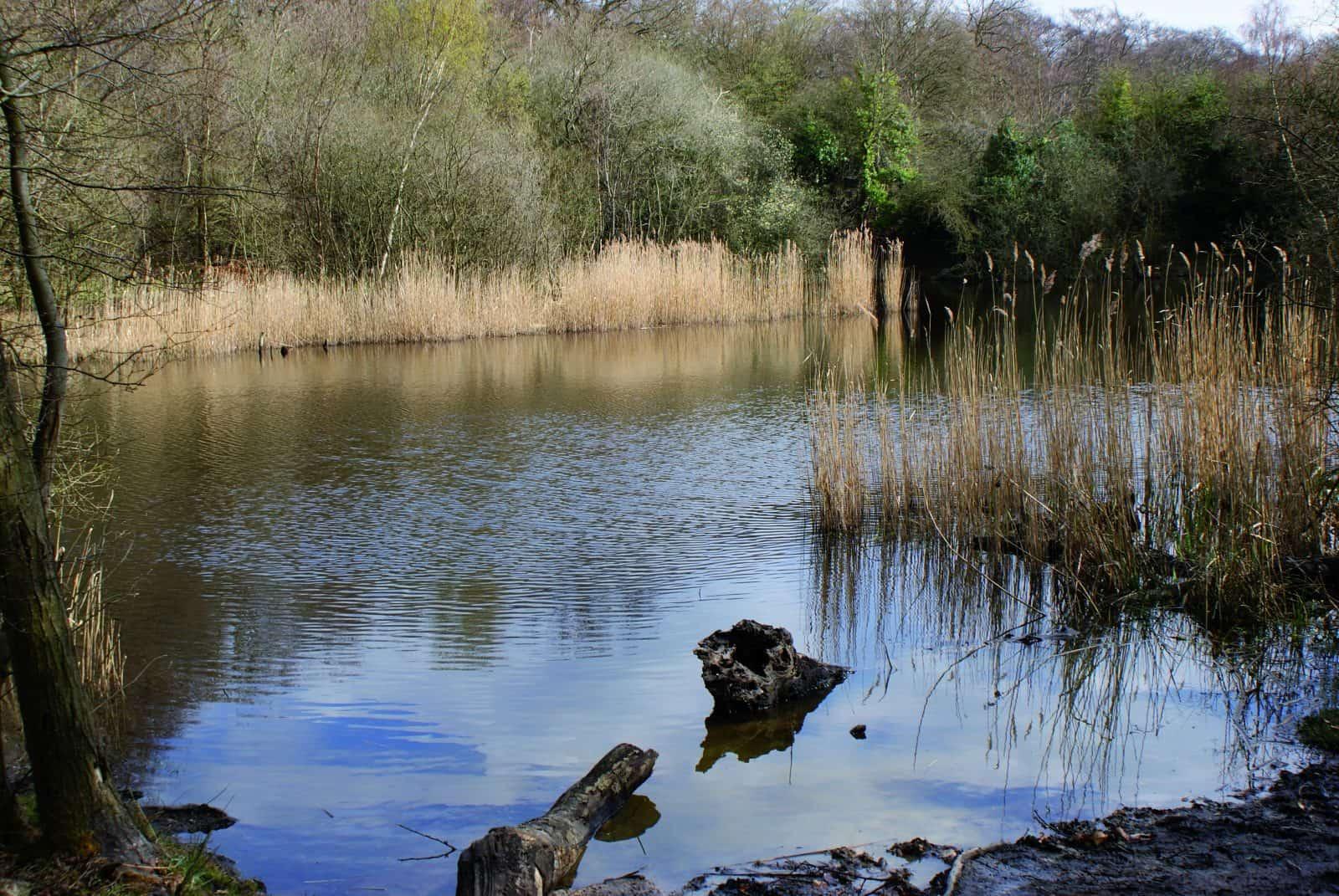 A freshwater habitat