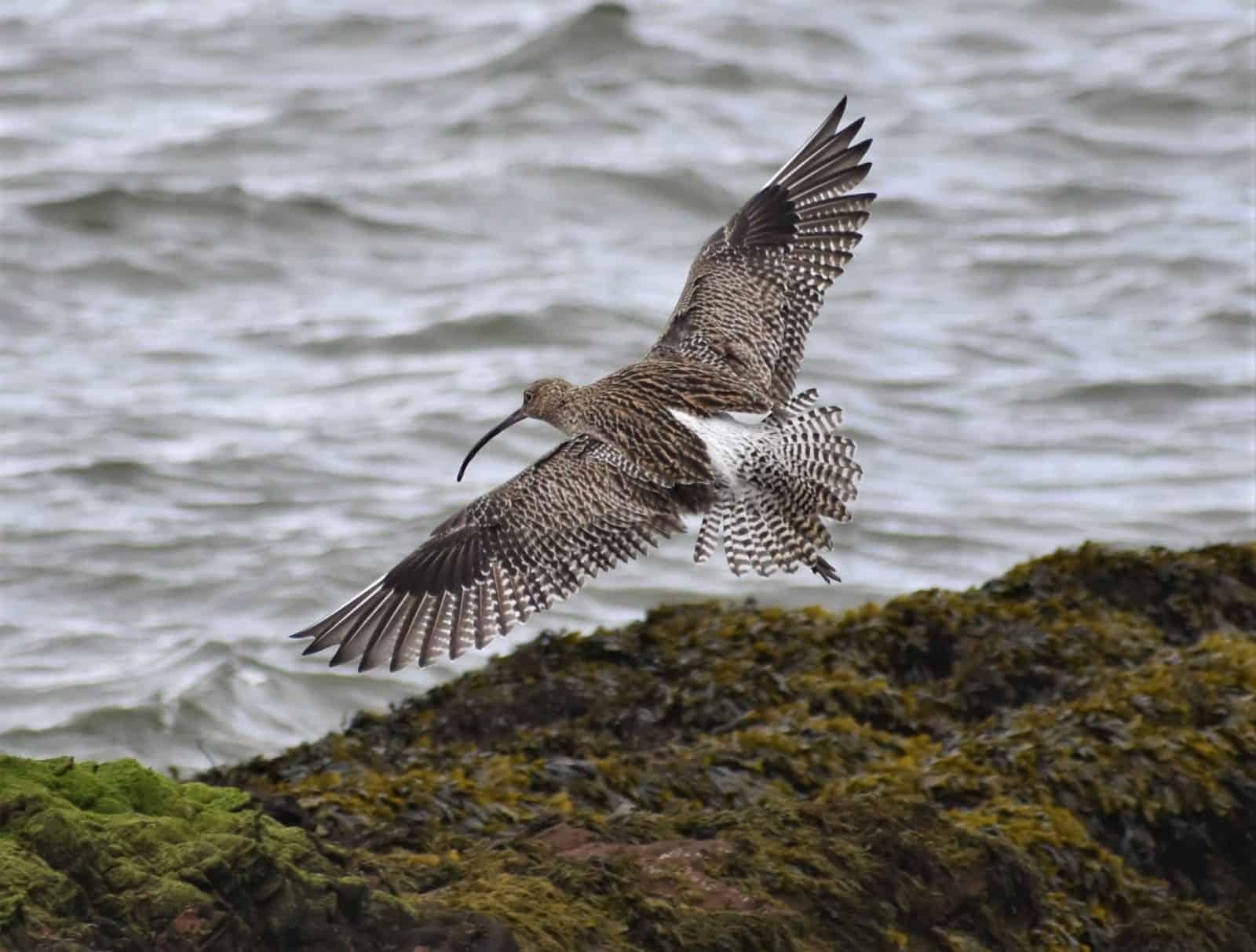 Coastal Bird flying from land