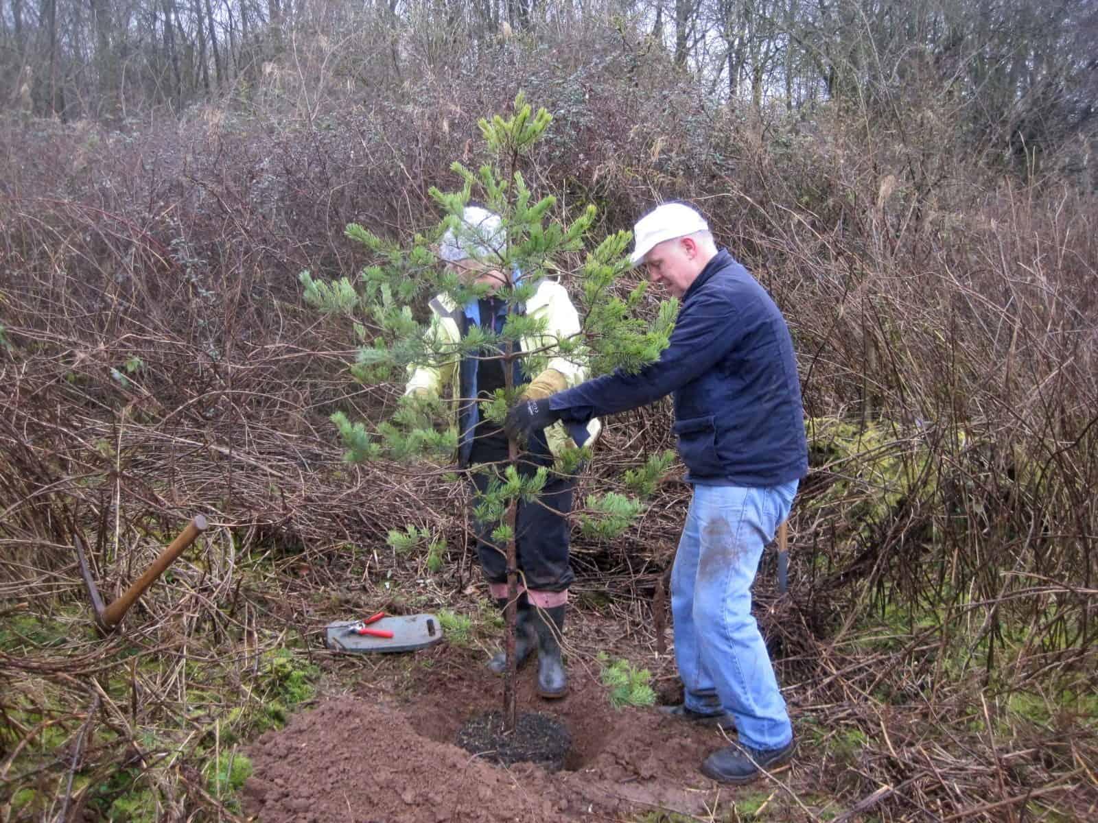Tree planting at Orielton