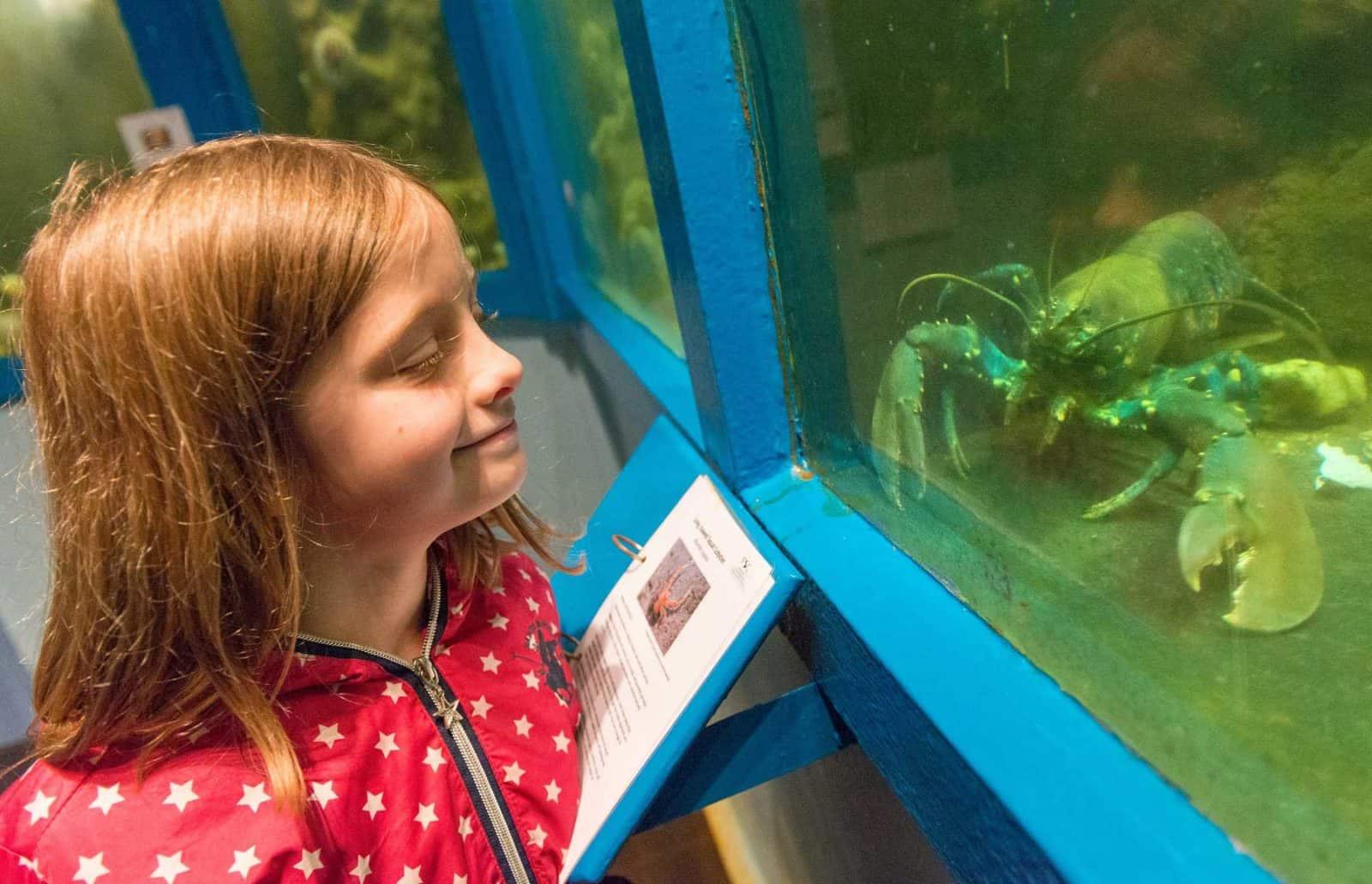 A girl looking in at the FSC Millport aquarium