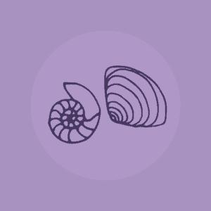 Shells icon